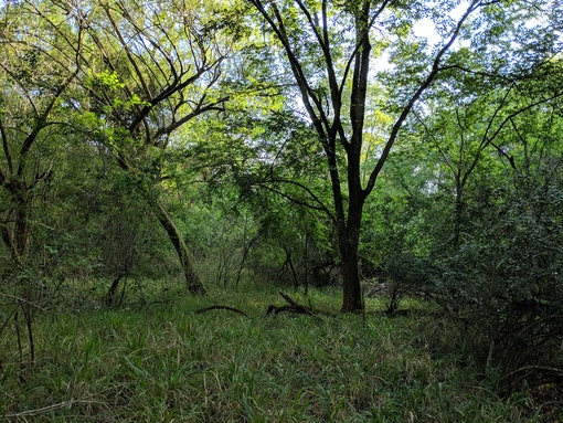 Roodewal Forest Nature Reserve